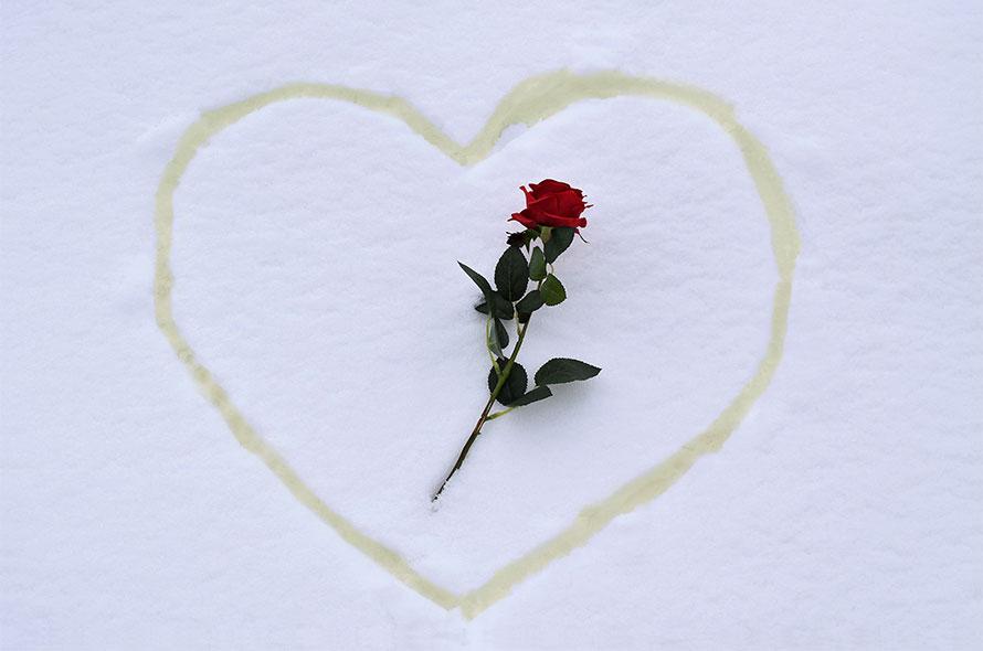 Ein in den Schnee gepinkeltes Herz mit einer Rose in der Mitte.