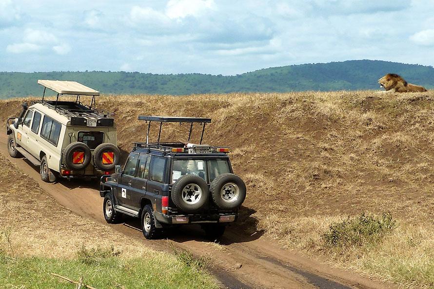 Zwei Geländewagen auf Safari halten neben einem Hügel, auf dem ein Löwe liegt